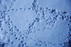 Piste animali su neve Immagini Stock Libere da Diritti