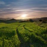 Piste che attraversano un campo verde nel tramonto nebbioso Fotografia Stock Libera da Diritti