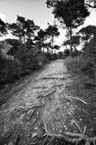 Piste courante alpestre dans la forêt Photos libres de droits