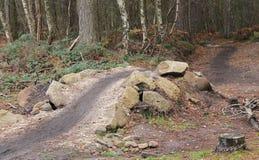 Piste cyclable de région boisée Images stock