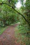 Piste dans la forêt Photographie stock libre de droits