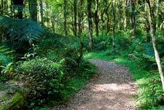 Piste dans la forêt Photographie stock