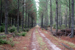 Piste de forêt Image stock
