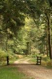 Piste de forêt Photos libres de droits