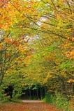 Piste de forêt d'automne Image stock