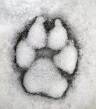 Piste de loup Photo libre de droits