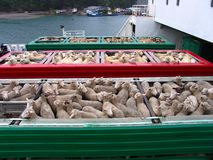 Piste de moutons Image libre de droits