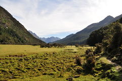 Piste de Routeburn, Nouvelle Zélande Photographie stock libre de droits