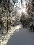 Piste de ski en forêt de l'hiver Photo libre de droits