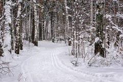 Piste de ski en forêt de l'hiver Photo stock