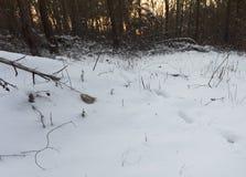 Piste dei cervi nella neve Immagini Stock