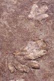 Piste del dinosauro Fotografie Stock