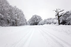 Piste del pneumatico nella neve Immagine Stock