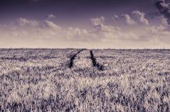 Piste del trattore nel campo Fotografie Stock