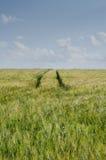 Piste del trattore nel campo Fotografia Stock Libera da Diritti
