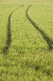 Piste del trattore nel campo di frumento Fotografia Stock Libera da Diritti