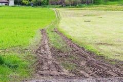 Piste del trattore nel campo verde Immagini Stock