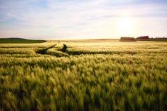 Piste del trattore su un campo di grano fotografie stock libere da diritti