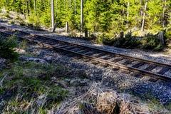 Piste del treno attraverso Sunny Evergreen Forest fotografia stock libera da diritti