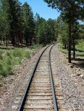 Piste del treno attraverso una foresta del pino Immagini Stock Libere da Diritti