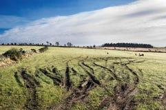 piste della gomma nel campo agricolo Fotografia Stock