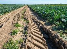Piste della gomma in un campo agricolo Immagini Stock
