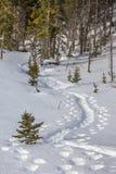 Piste della racchetta da neve in vento fresco della neve attraverso gli alberi Immagini Stock Libere da Diritti
