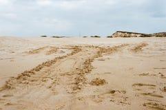 Piste della tartaruga di mare Immagini Stock Libere da Diritti