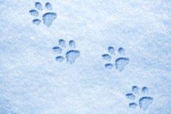 Piste della zampa del gatto sulla neve Immagini Stock Libere da Diritti