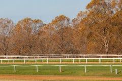 Piste di addestramento del cavallo che recintano gli alberi Immagini Stock Libere da Diritti
