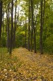 Piste en stationnement d'automne Images stock