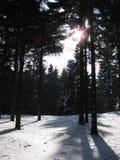 Piste nella neve nella foresta di inverno Immagini Stock Libere da Diritti