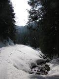 Piste nella neve nella foresta di inverno Fotografia Stock