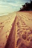Piste nella sabbia Immagini Stock Libere da Diritti
