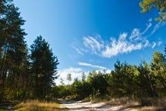 Piste par la forêt Photographie stock