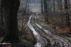 Piste par la forêt Photographie stock libre de droits