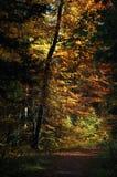 Piste par la forêt automnale Photographie stock