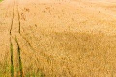 piste parallele in un giacimento di grano Fotografia Stock