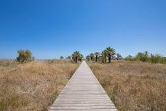 Piste pour piétons en bois en nature vers des palmiers Photo stock