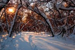 Piste sulla neve nella foresta di inverno Immagini Stock