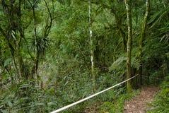 Piste sur la forêt photographie stock libre de droits