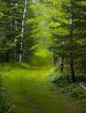 Piste verte par la forêt humide Image libre de droits