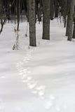 Pistes animales dans la neige Photos stock