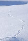 Pistes animales dans la neige Photographie stock libre de droits