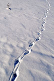 Pistes animales dans la neige image stock