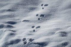 Pistes animales dans la neige photographie stock