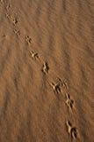 Pistes animales en sable, images stock