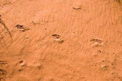 Pistes animales en sable rouge photographie stock libre de droits