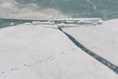 Pistes animales sur la neige image stock