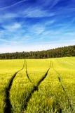 Pistes d'entraîneur dans le domaine de blé Photographie stock libre de droits